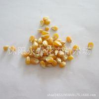 水果玉米种子批发 水果玉米种子可生吃 超甜 可做爆米花