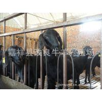 种羊黑山羊多少钱一只 努比亚改良黑山羊怀孕羊 肉羊 小羔羊