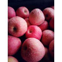 烟台苹果烟台蓬莱红富士苹果购销