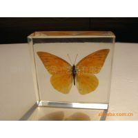 供应昆虫蝴蝶标本人造琥珀,天然水晶胶工艺品