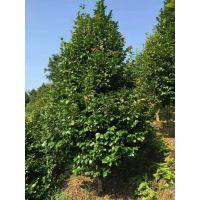 成都茶花笼子基地精品茶花笼子直销低价格质量优批量供应