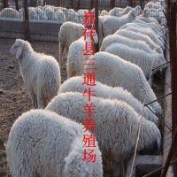 陕西小尾寒羊羊羔 陕西养殖小尾羊 山西哪里有小尾寒羊养殖场