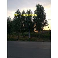 石家庄太阳能路灯厂家,LF-TK0130石家庄太阳能道路灯价格12V30W-100W LED路灯配置