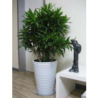 提供写字楼内的室内绿化植物养护工作,欢迎来电咨询!