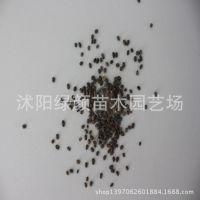 供应农作物种子 黑小豆种子 粮食作物 价格低廉 质量从优