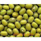 供应绿豆 规格齐全 经 比重 去石 色选 颗粒均匀无杂质