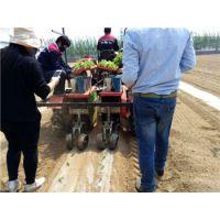 移栽机|2ZBX-2型冬瓜苗移栽机|专业安装免费技术指导|冬瓜苗秧苗机|田耐尔