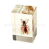 厂家供应特龙品牌 昆虫琥珀书镇/纸镇 高档琥珀饰品 树脂工艺品