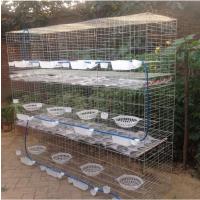 辽宁哪里卖养鸽子的笼子 锦州鸽子笼子价格 雄振葫芦岛四层16位笼位