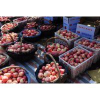 陕西礼泉红富士苹果新鲜水果爽脆