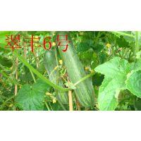 翠丰6号黄瓜种子 泰国类型黄瓜