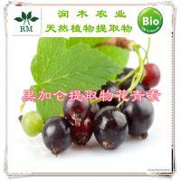 植物提取物原花青素-黑加仑提取 10%