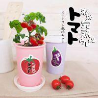 DIY创意迷你栽培可爱植物办公室桌面绿植蔬菜微景观广告礼品批发