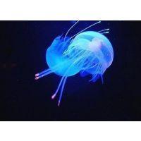 供应立华塑胶专用夜光粉 硅胶环保夜光粉 鱼具浮漂高亮长效夜光粉