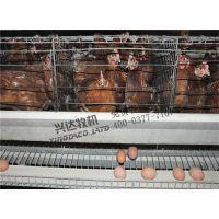 海西自治州自动捡蛋机、兴达农牧(图)、自动捡蛋机报价