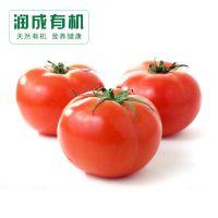 天然绿色农产品批发 有机西红柿  有机蔬菜批发  可订购 欢迎选购