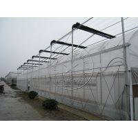 一亩钢架温室大棚多少钱?花卉蔬菜种植温室大棚专业建造