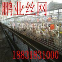 肉鸡笼价格——衡水区域规模大的肉鸡笼厂家