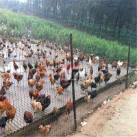 供应60*60网孔孔型荷兰养殖网黄石养鸡围网市场价格波动
