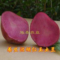 地泰农业红土豆 新鲜红玉土豆 富含硒元素 全营养蔬菜全国批发