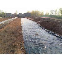 莲藕地膜种植技术 莲藕种植地膜覆盖栽培方法
