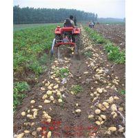 【土豆、马铃薯、地瓜、洋芋、地蛋】收获机,收宽垄双苗