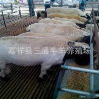 杜泊绵羊养殖场