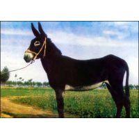 肉驴屠宰厂-肉驴养殖要谨慎