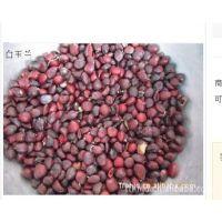 供应广玉兰种子,山玉兰种子,紫玉兰种子,热卖抢购中