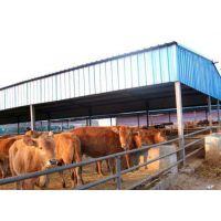 万隆牧业(在线咨询)、鲁西黄牛、鲁西黄牛报价
