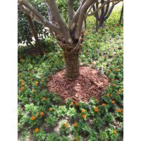 上海丛郁园艺-树皮 松鳞有机覆盖物
