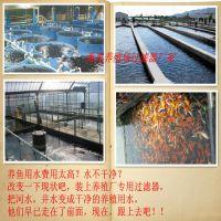 湛江养鱼场除浑浊异味净化处理设备 水产养殖净水过滤器 养殖用水处理设备