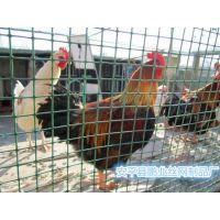 江苏养鸡绿色铁丝网荷兰网厂家#优质围栏隔离荷兰网价格