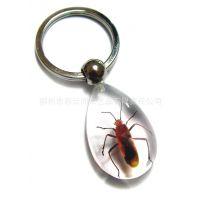 2014热销款 水滴透明昆虫琥珀钥匙扣 手饰批发 旅游纪念品