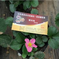 红花草莓苗种植,广安红花草莓苗,乾纳瑞农业科技(在线咨询)