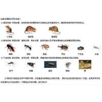 海淀家庭杀虫公司|家庭杀虫公司|天下无虫(在线咨询)