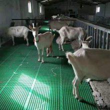 山东羊床 纯原料生产羊用漏粪板 福德中兴专业生产羊用漏粪板