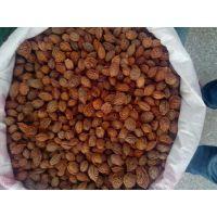 出售桃核,今年桃胡价格,山东桃胡批发价,桃树种子