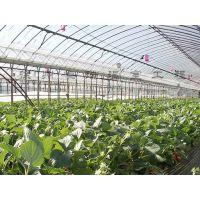 徐州温室大棚 承接玻璃温室、薄膜温室等大棚建造,拥有自己独立加工工厂
