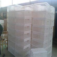肉鸡运输筐 EPS30R可折叠型周转箱 方形大鸡筐