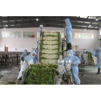 供应华邦HB-800蔬菜清洗风干挑选流水线 品质