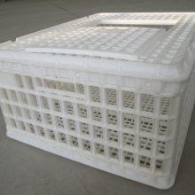 大鸡筐 方形塑料大鸡筐 运输鸡笼 厂家直销