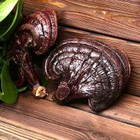 广西红灵芝属于什么品种 康瑞灵芝