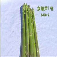 国产京绿龙1号-高产芦笋种子