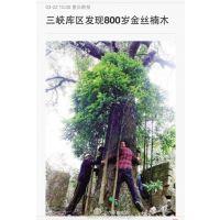 供应800岁金丝楠木古树做的棺材 楠木世家牌