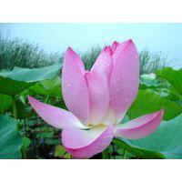 安新县嘉祥水生植物种植有限公司