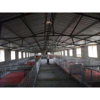 保育床,恒力机械(图),母猪保育床