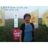 河南小麦拌种就用真拌乐 控蚜增产管一季 大包装使用方便的种衣剂