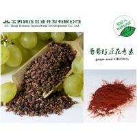 专业供应葡萄籽提取物原花青素95%