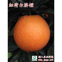 农产品合作社纽荷尔脐橙苗